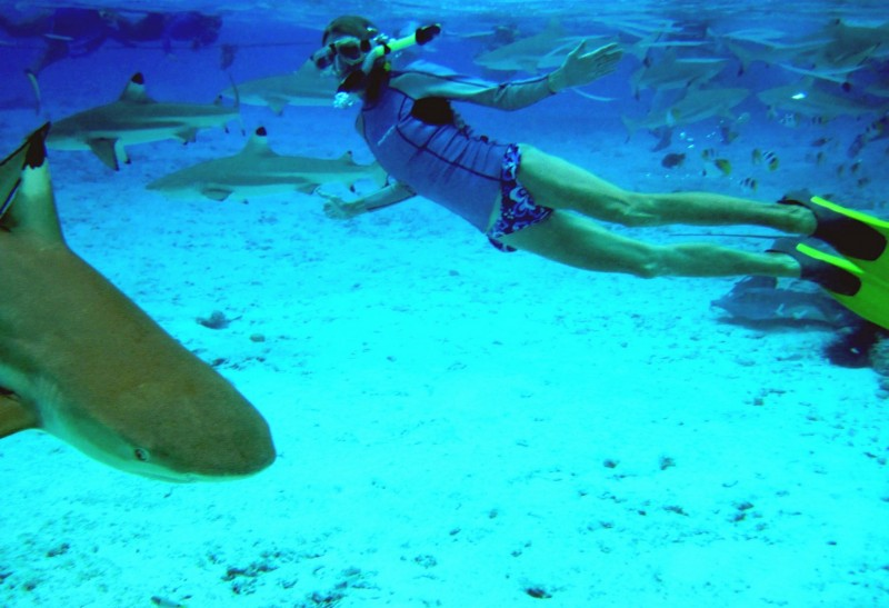 Snorkelliong with Sharks