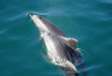 Dolphins in New Zealand