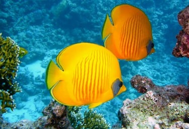 Bahamas Tropical Fish